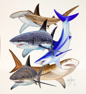 Guy Harvey Shark Collage