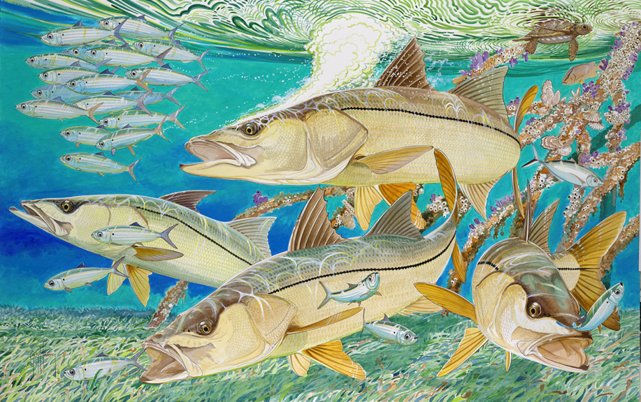 snook guys Snook harvest season was to open on sept 1 in our region  more than 15 million licensed anglers and another 1 million visiting anglers which support more than 65,000 jobs — guys like o.